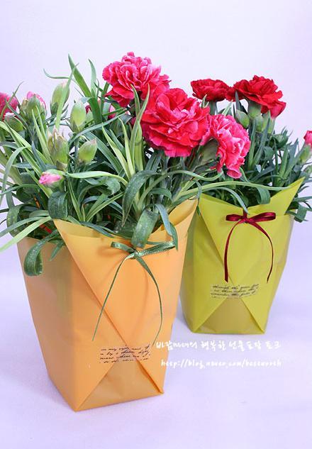 Красивые горшечные цветы в подарок