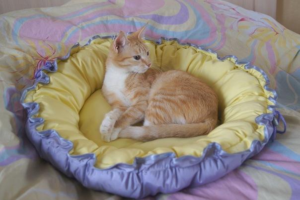 Лежанка для кошки своими руками с фото
